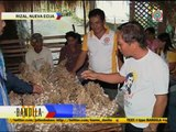 How Nueva Ecija farmers are affected by imported garlic