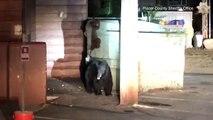 Un policier vient aider un ourson pris au piège dans une poubelle !