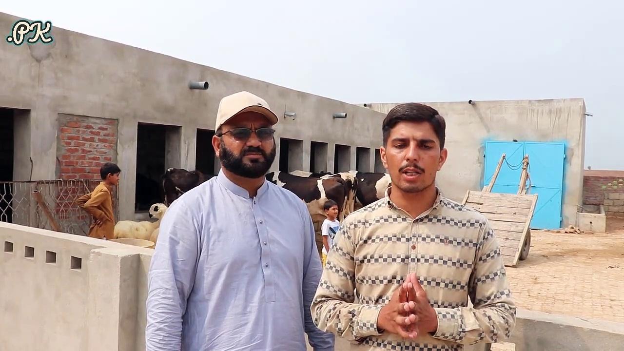 Motla Farm House in Sialkot _ Cows Farming in Urdu _ Cows Farming VS Buffaloes Farming _ Cow Farm  —– پڑھے لکھے بھائی کا فریزین کراس گاۓ کا زبردست فارم ,اعلیٰ نسل کی گاۓ کو چھوٹے پیمانے پر رکھنے کی ٹپس