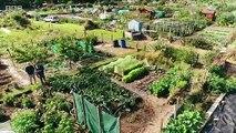 The Beechgrove Garden episode 14 2019