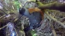 Il voulait filmer l'éclosion d'oeufs d'oiseau dans un nid mais ce qui se passe est incroyable