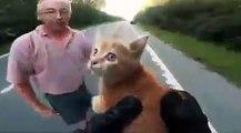 Un motard à la rescousse d'un chaton au milieu d'une autoroute