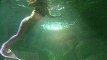 Vannes. Une sirène dans les bassins de l'aquarium