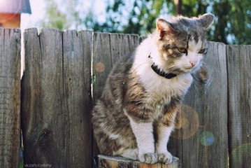 ¿Qué es la coriza del gato?