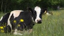 Direction générale de l'alimentation : le bien-être animal