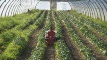 Direction générale de l'alimentation :  réduire et mieux encadrer l'usage de produits phytosanitaires