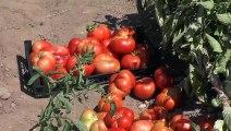 Huzur bulduğu köyünde organik sebze ve meyve yetiştiriyor - TUNCELİ