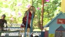 L'Ile aux singes amuse les touristes mais pas les macaques