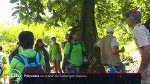 """Polynésie : l'escargot """"Partula"""" est de retour sur ses terres"""