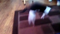chat surpris avec un aspirateur et tapis. L'expression spéciale du chat