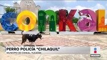 Chilaquil, el perro policía que conmueve a Yucatán