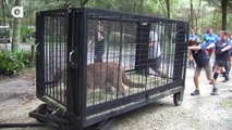Big Cat Rescue - Making a Difference!