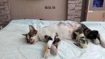 'Şans' sezaryenle geldi...Doğum yapamayan kediye sezaryen operasyonu