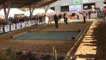 Amanda de l'élevage Allix de Carantilly championne de la Manche à Lessay