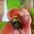 Compilation d'araignées mignonnes. Trop Mimi ! Hilarant !