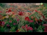 Melody - Realize (opening Dragonzakura)
