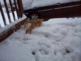 Bernard le chat joue dans neige