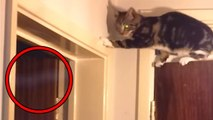 Top 15 Scary Ghost Sightings By Pets Caught on Tape