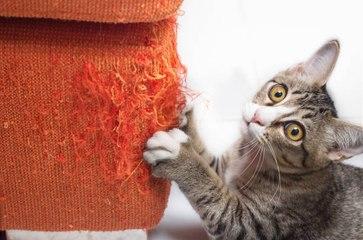 ¿Cómo evitar los arañazos de gato en los muebles?