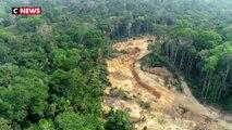 Brésil : la déforestation de l'Amazonie a presque doublé sur un an