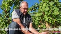 Christophe Pichon, viticulteur et président de l'AOC condrieu.