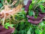 MUSHROOM Gravy Recipe - Chettinad Style Mushroom Masala Cooking in Village - Mushroom Village Food