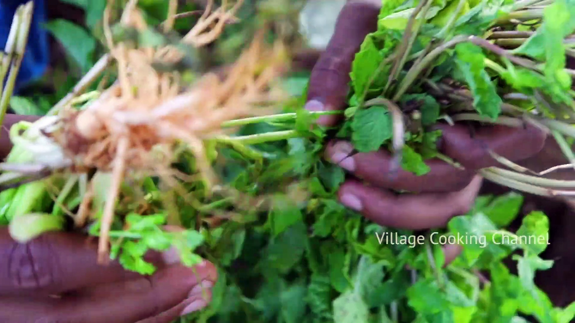 MUSHROOM Gravy Recipe – Chettinad Style Mushroom Masala Cooking in Village – Mushroom Village Food