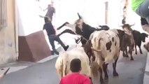 Un homme court à côté d'un taureau et se fait éjecter