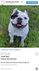 Les comptes d'animaux stars à suivre sur Instagram