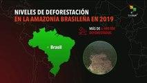 Se incrementa la deforestación de la Amazonía brasileña 91.9% en 2019