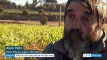 Hérault : 300 hectares détruits dans un incendie