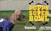 This Puppy Super Bowl Is SO Much Cuter Than The Official 2017 Super Bowl!