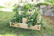 How to Build a Tiered Strawberry Planter