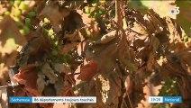 Sécheresse : une situation exceptionnelle qui inquiète agriculteurs et pompiers