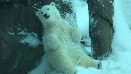Animals Play After Huge Snow Storm Shuts Down Oregon Zoo