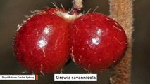 Shrub Which Resembles A Dog's Body Part To Be Named New Species