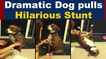 Dramatic Dog Faints to avoid nail trimming, VIRAL VIDEO | Dog hilarious stunt goes viral | Boldsky