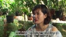 Vietnam: une bactérie injectée aux moustiques pour éradiquer la dengue