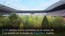 Estadio de fútbol convertido en bosque