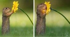Un photographe capture les précieux moments de la vie dans la nature lorsque personne n'est à proximité