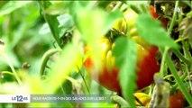 Alimentation : peut-on faire confiance aux produits estampillés bio ?