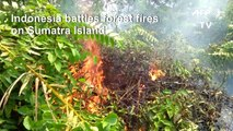 Forest fires rage in Indonesia's Sumatra