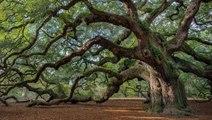 El asombroso lenguaje secreto de los árboles que ha dejado perplejos a los científicos