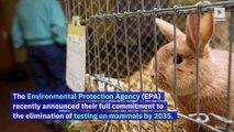 EPA Announces Plan to End Animal Testing