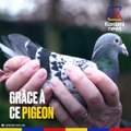 Le propriétaire de ce pigeon est devenu… millionnaire !