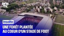 Un stade de football en Autriche se transforme en mini-forêt