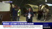 Dans l'Hérault, une centaines d'élèves se rendent à l'école... en calèche
