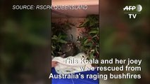 Koala and her joey rescued from Aussie wildfires
