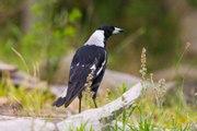 ¿Cómo mantener a las aves alejadas de tu jardín?