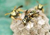 ¿Cómo mantener a las avispas alejadas de tu jardín?